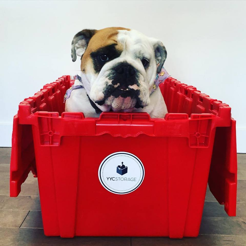 YYC Storage Calgary - Cute Dog in a storage box